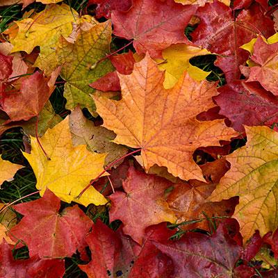 Folhas caídas do Outono