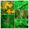 Ervas aromáticas na Meloteca
