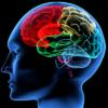 Música e cérebro